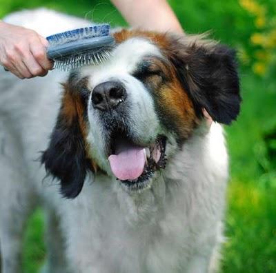 pet at home brushing