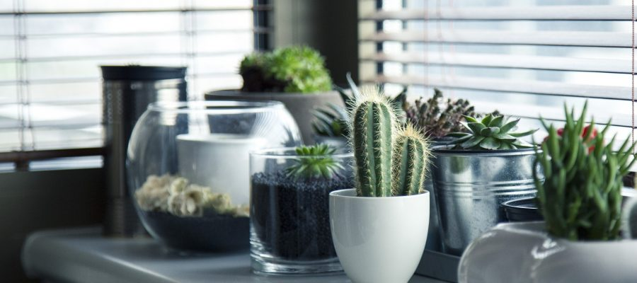 suitable plants for home