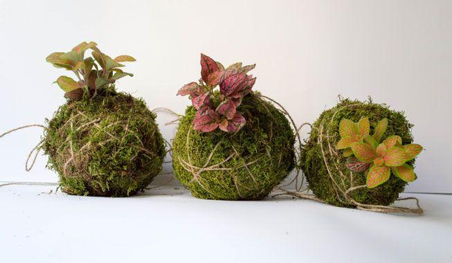 kokedama plant