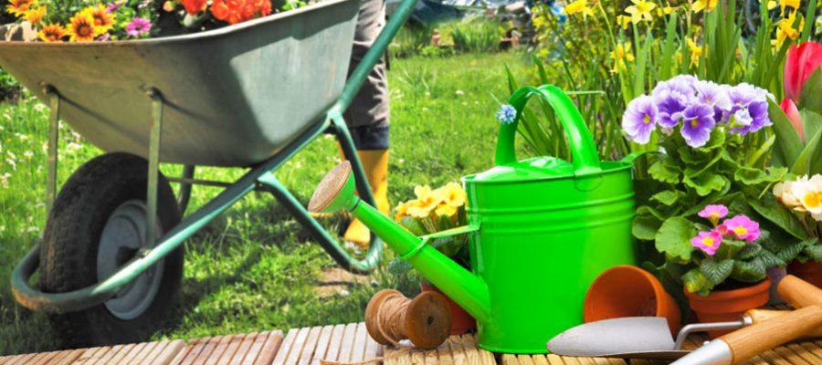 garden improvement ideas