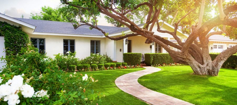 This tree is very beneficial for your garden