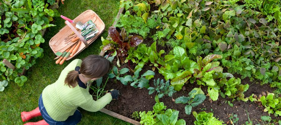Why you should consider growing your own vegetables