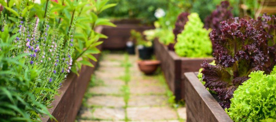 Best tips for raised flower beds