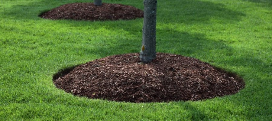 Coniferous mulch and why should you choose it over other types