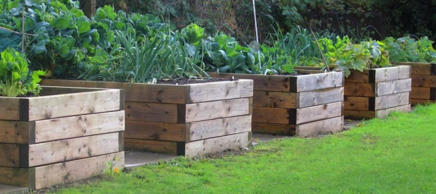 Raised vegetable gardens and how to achieve them